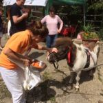 Open day raises £358 for The Brooke